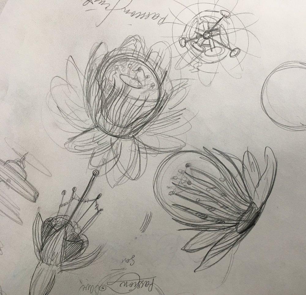Passion flowers esquisses