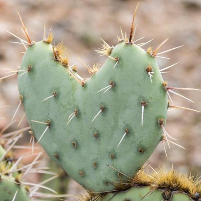 Samantha Starr - Tucson, AZ