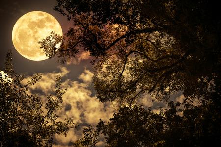 Full Moon Fall.jpg