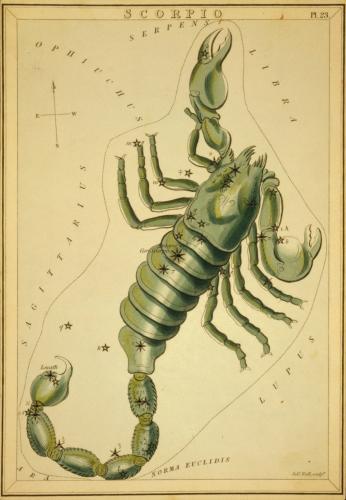 """Scorpio"" (Urania's Mirror)"