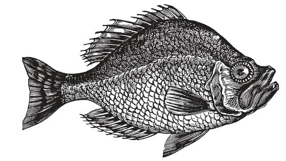 Fish Web Banner.png