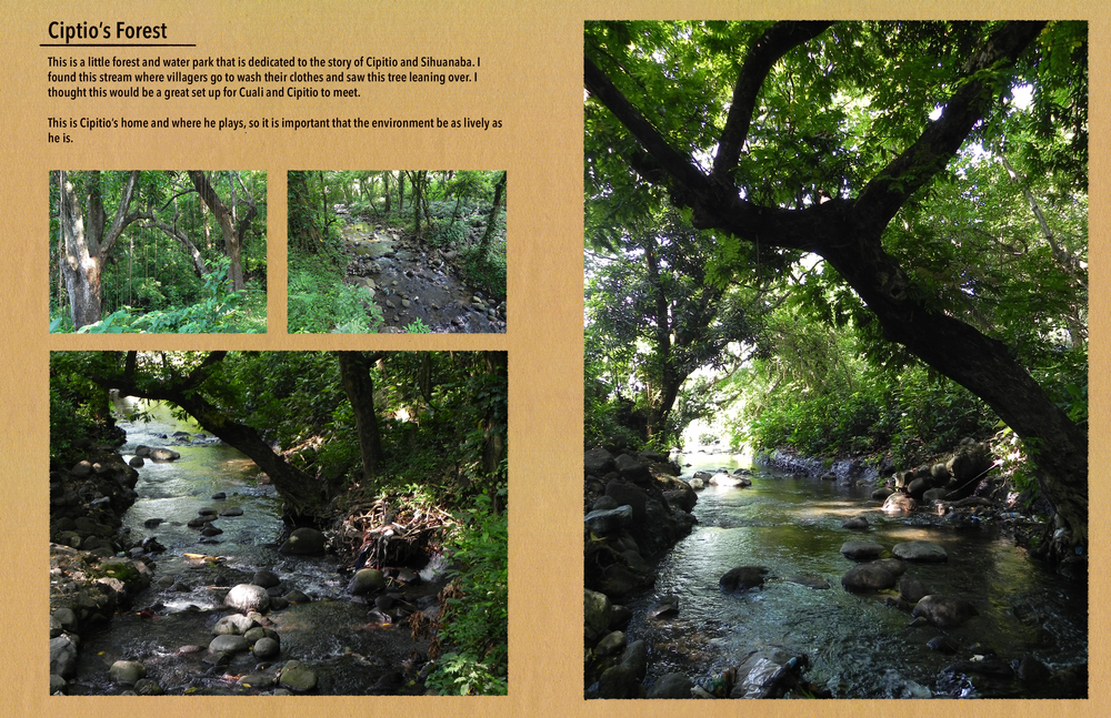 refphotos_forest.png