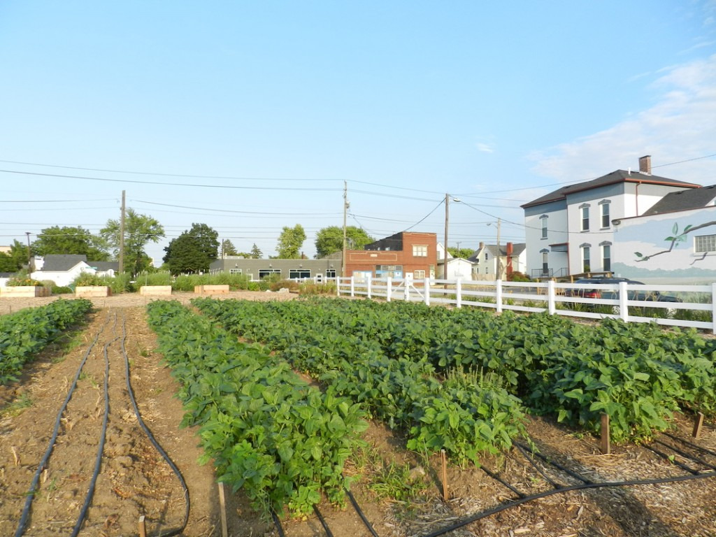 south circle farm 2