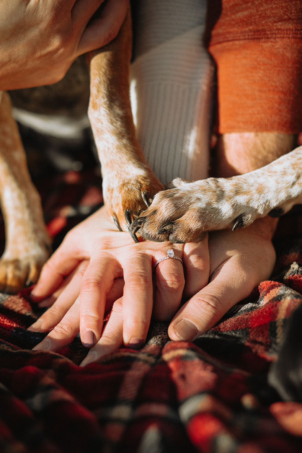 Shutter Up Studios | Wedding photographer in Crawfordsville Indiana | Diamond engagement ring with hands and dog paws at Sugar Creek Nature Park