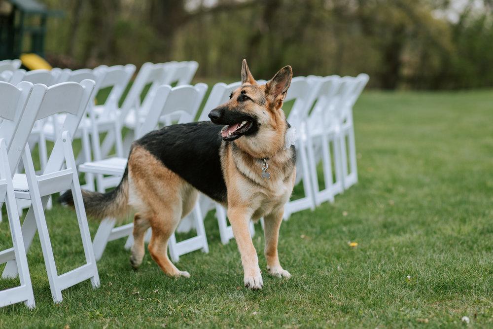 Shutter Up Studios   Wedding photographer in Pittsburgh, Pennsylvania   Elegant country chic ceremony with German shepherd dog