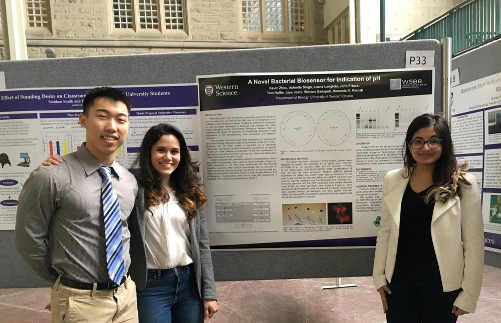 WSBR student directors presenting their work at Western Research Forum 2017. (from left to right: Kevin Zhou, Luana Langlois, Ashmita Singh)