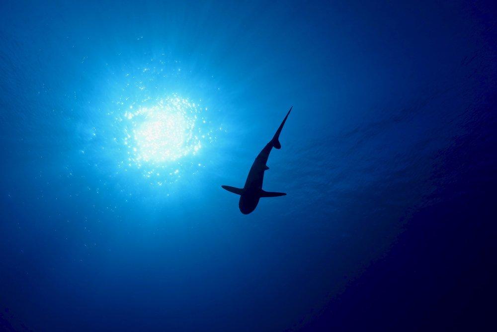 """Fakarava Silhouette"" ~ Fakarava, French Polynesia, no.6"