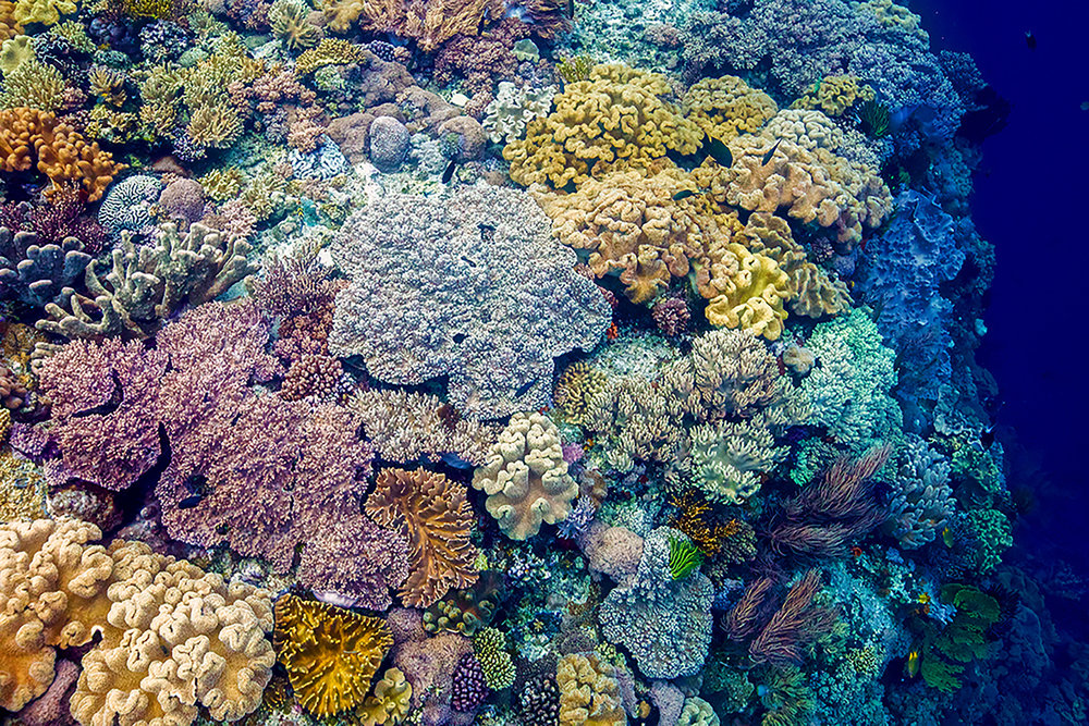 """Happy Coral"" ~ Forgotten Islands, Indonesia ~ no.27"