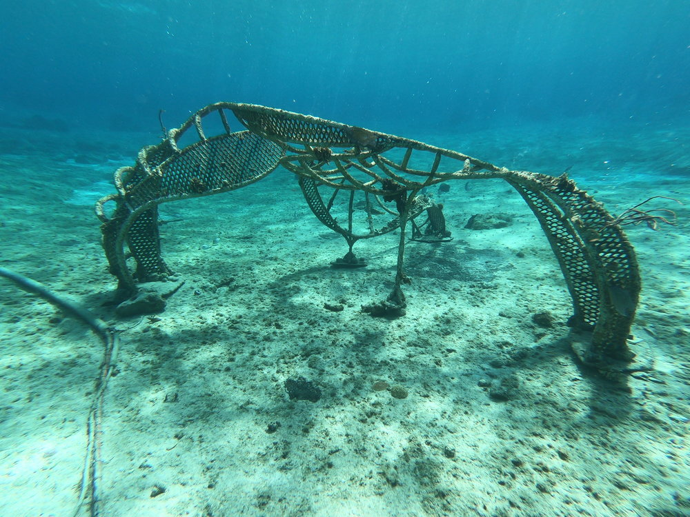 A  bio-rock  sculpture with coral fragments attached along its frame.