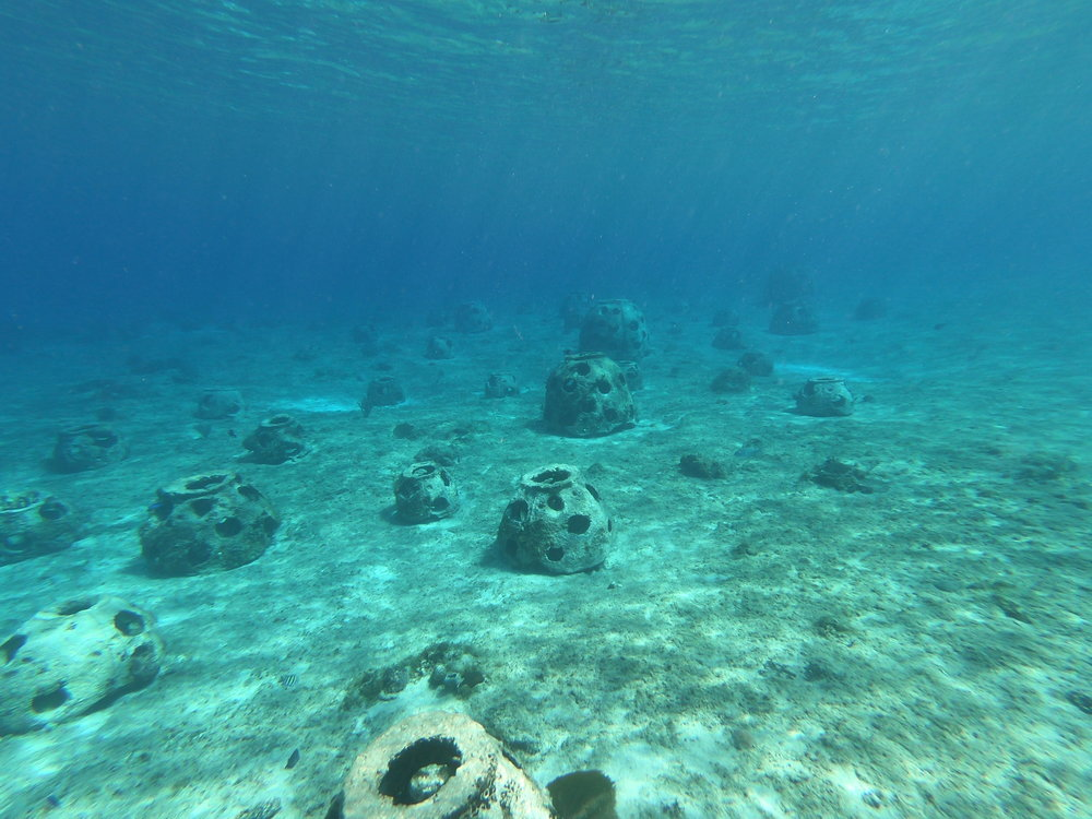 A vista of reef balls, future sites for CCRRP outplanting
