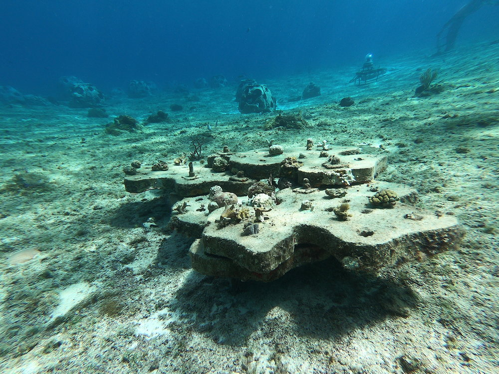 Coral fragments outplanted on an old boat gear