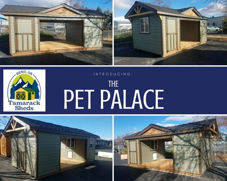 Pet Palace.jpg