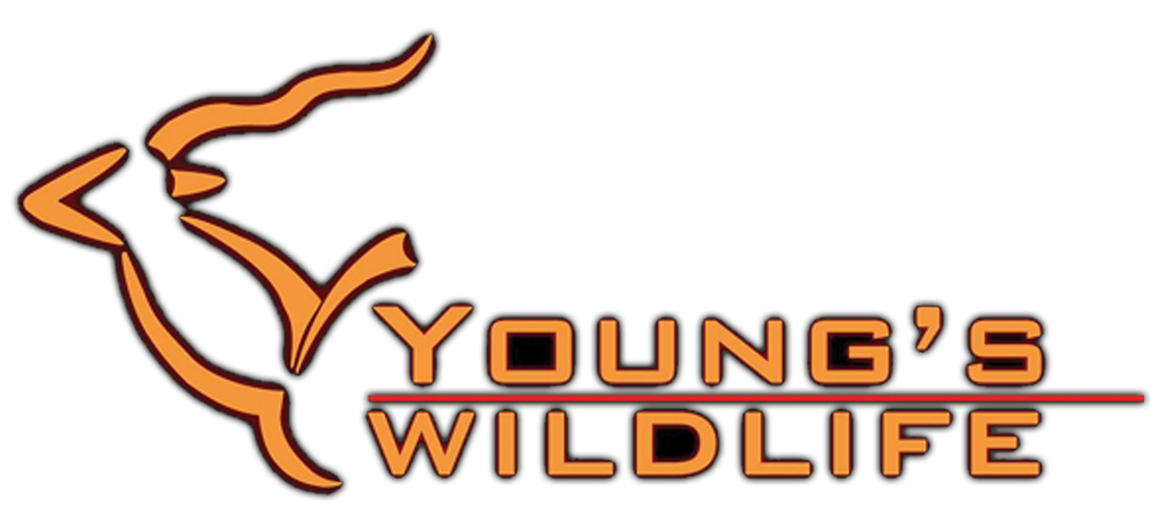 Youngs Wildlife