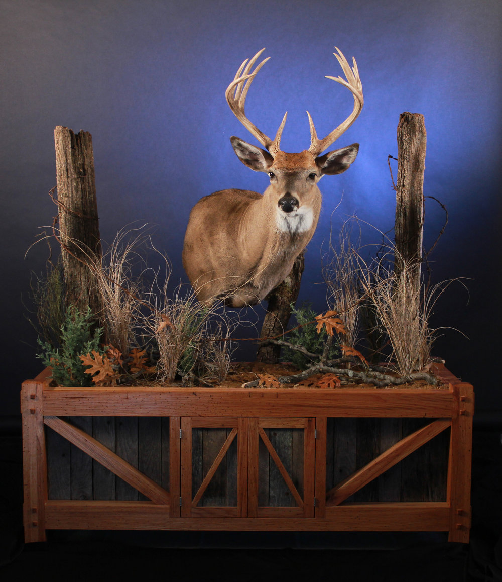 Whitetail Photo.jpg