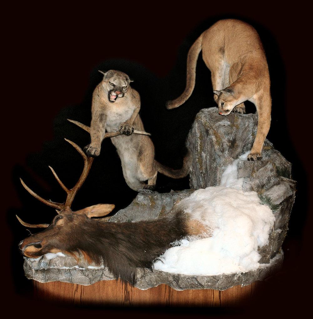 Cats&Elk.jpg
