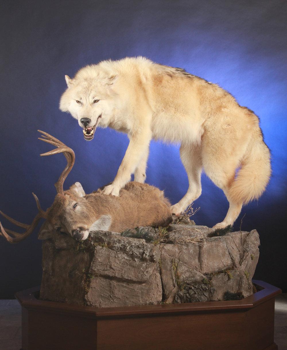 Deer & Wolf.jpg