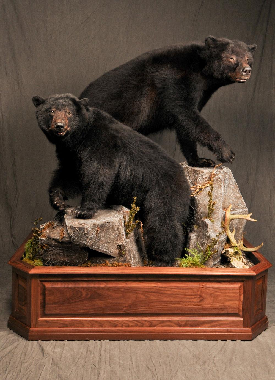 Two Bears.jpg