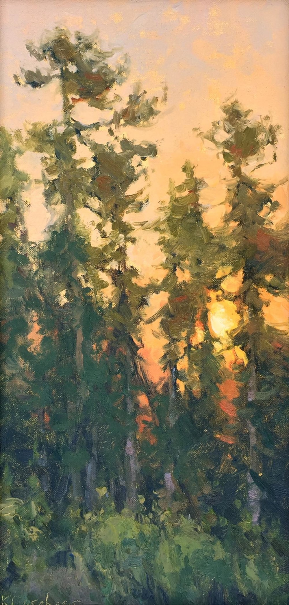 Last Light Pines