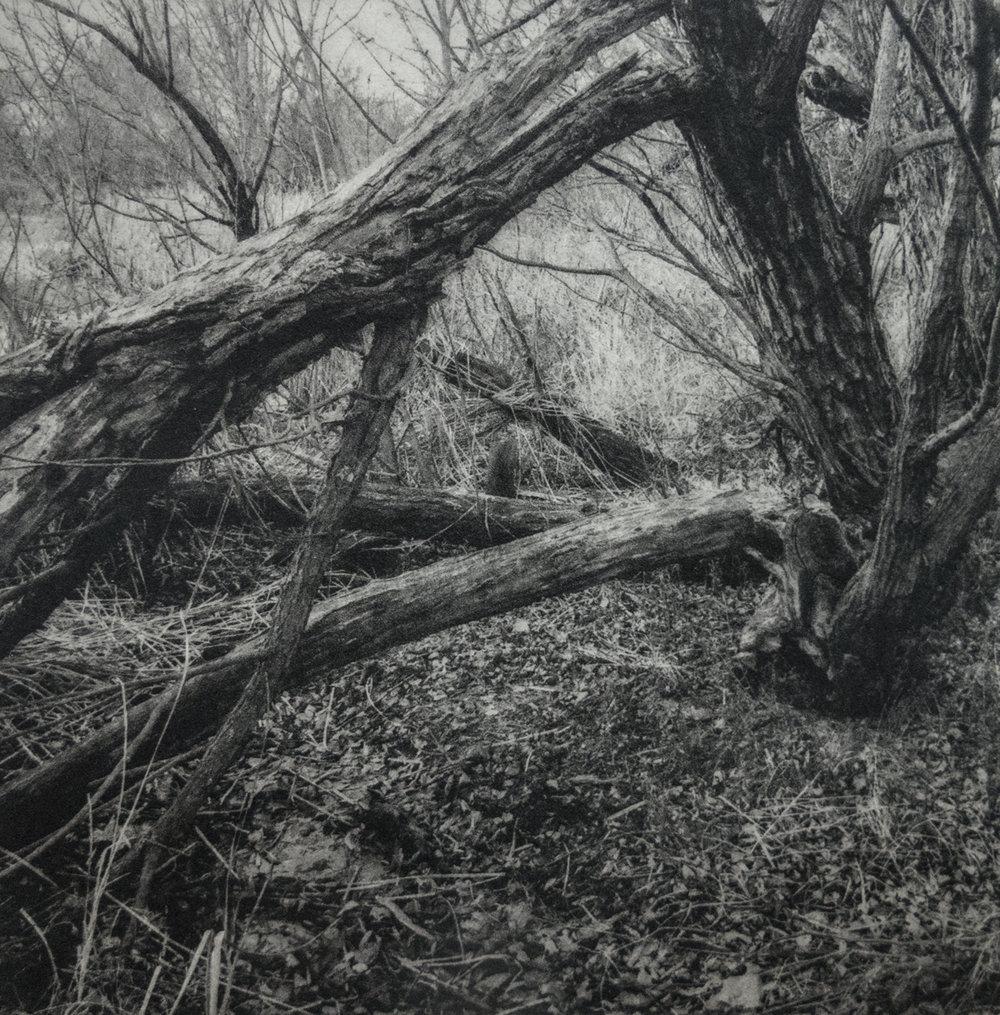Claudia Danielson   Broken Tree   Polymergravure