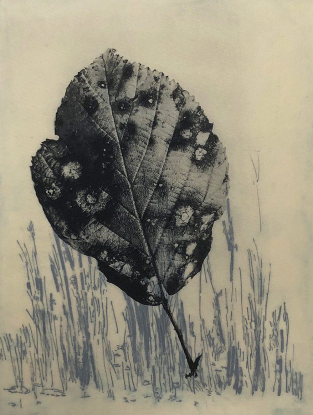 Frances Valesco,  Certain Grasses #4 , polyester plate lithography