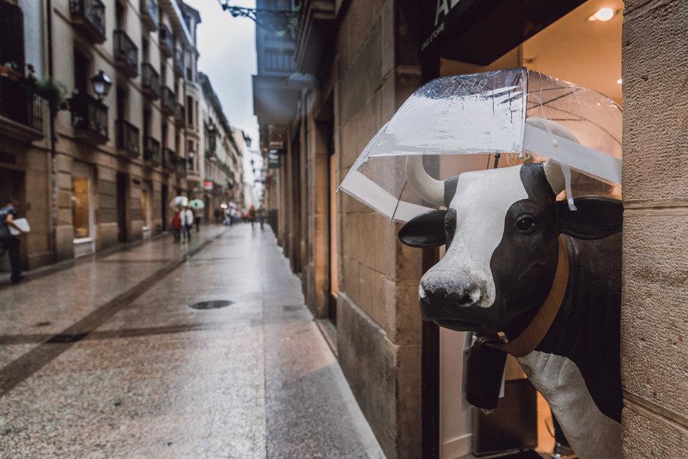 San Sebastian Cow