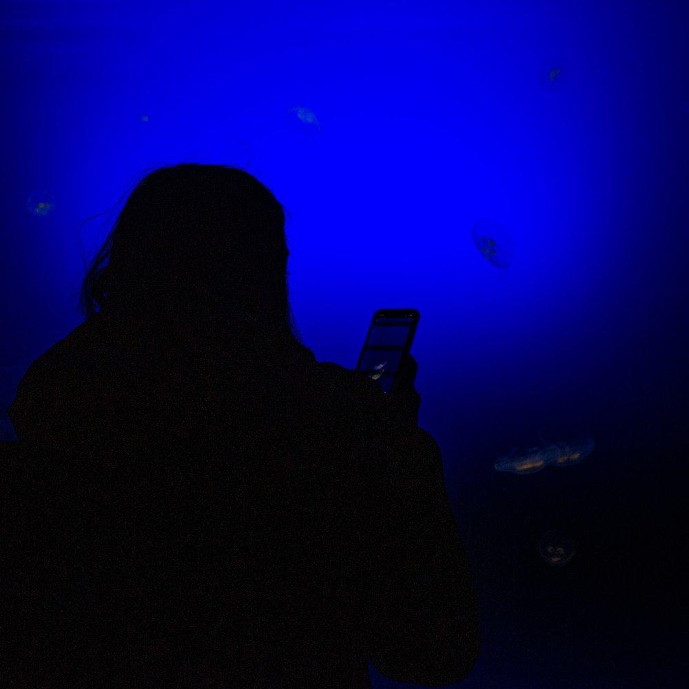 San Sebastian Aquarium Jelly-Fish