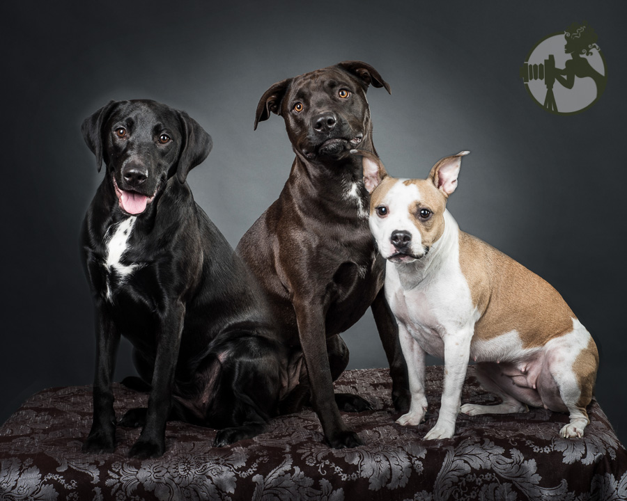 Three lovely rescue dogs in one family.