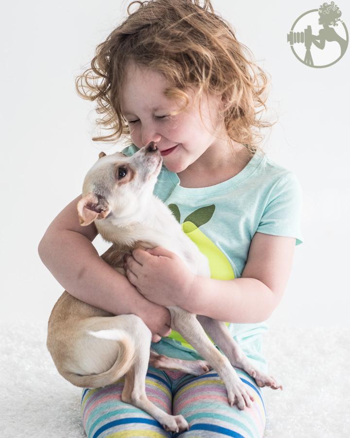 Chihuahua-Dog-Melissa-Laggis-3.jpg