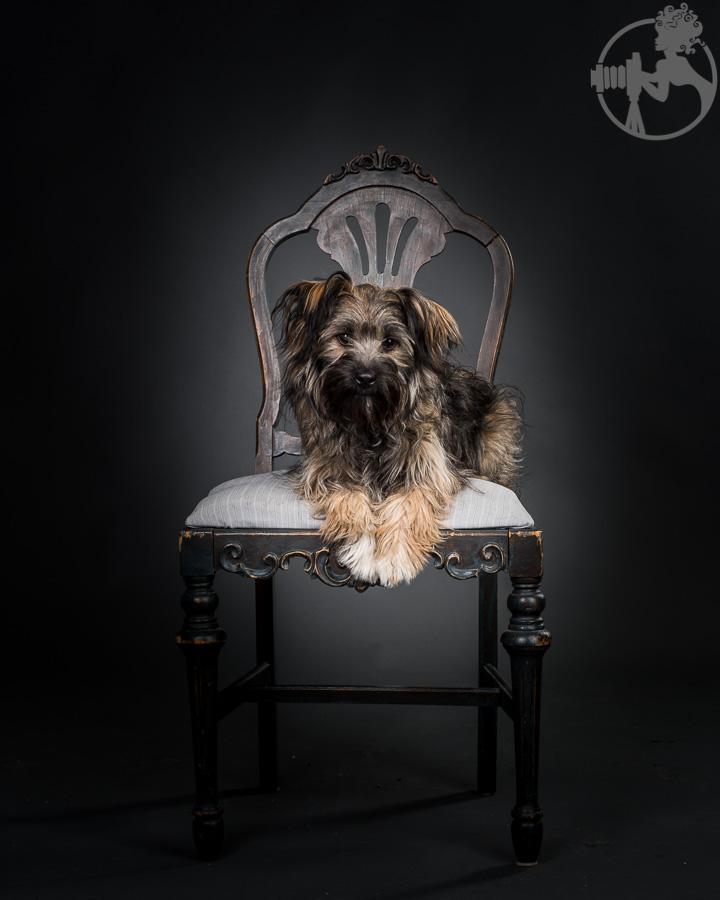 Chewy-Dachshund-Terrier-Mix-Breed-Melissa-Laggis-3.jpg