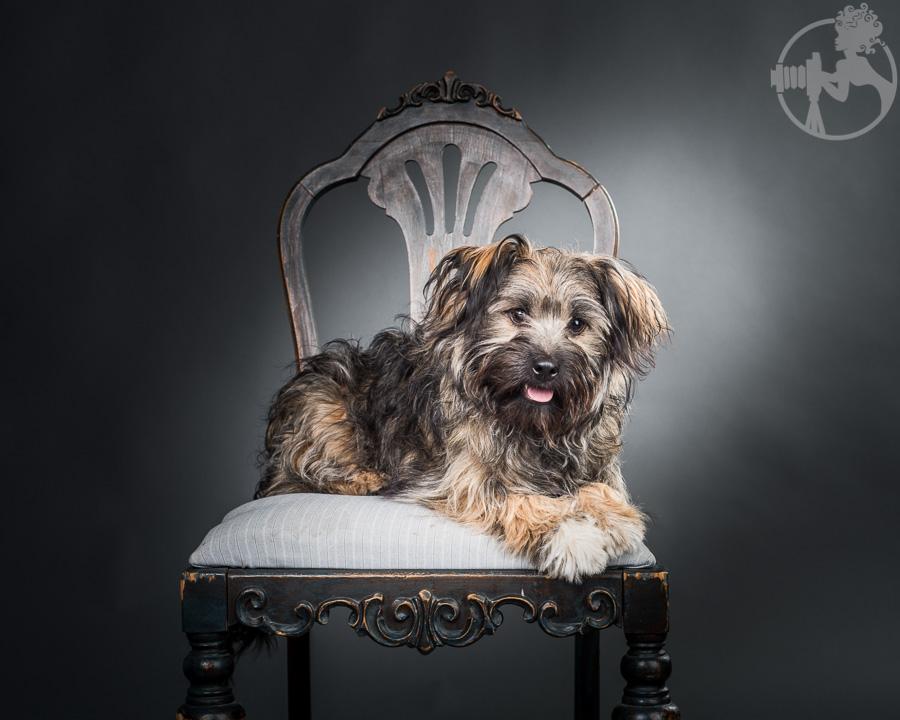 Chewy-Dachshund-Terrier-Mix-Breed-Melissa-Laggis-4.jpg