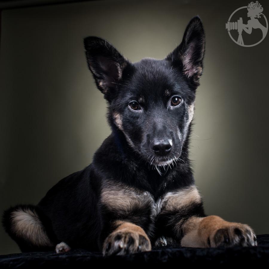 M-German-Shepherd-Dog-Melissa-Laggis-2.jpg
