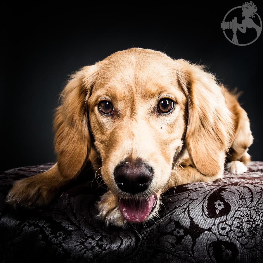 R-Goldendoodle-Dog-Melissa-Laggis-5.jpg