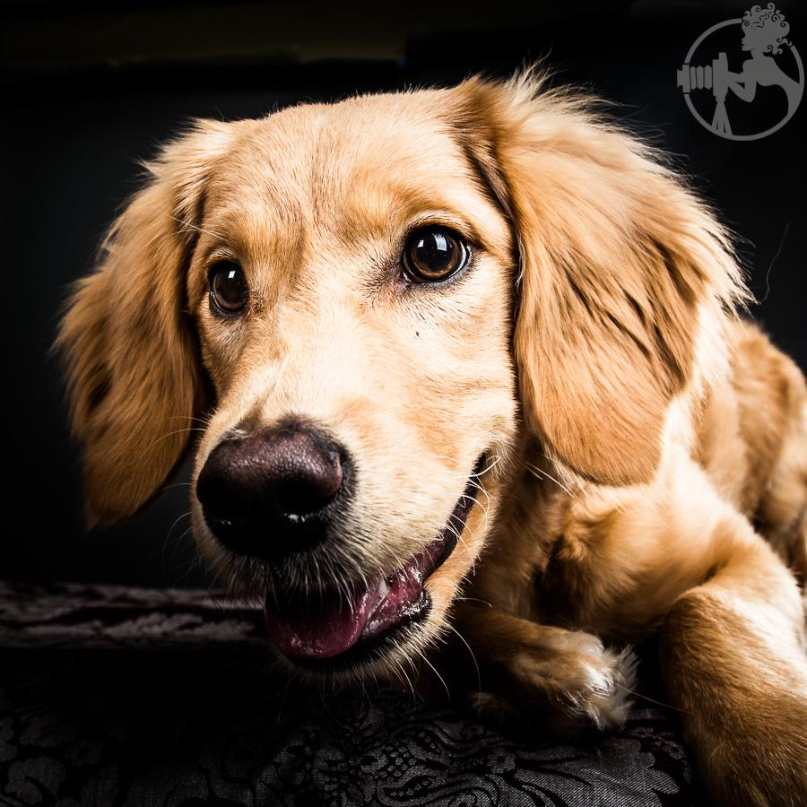 R-Goldendoodle-Dog-Melissa-Laggis-7.jpg