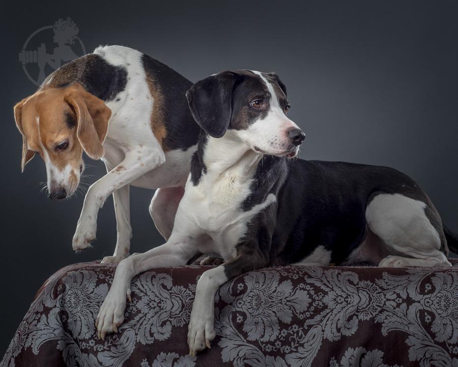 Beagle-Mix-Dog-Melissa-Laggis-2.jpg