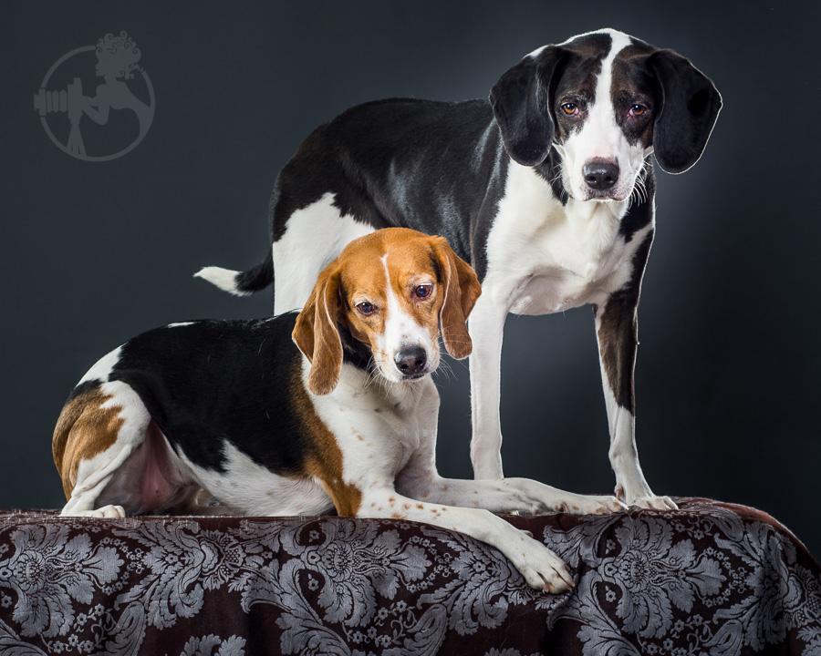 Beagle-Mix-Dog-Melissa-Laggis-1.jpg
