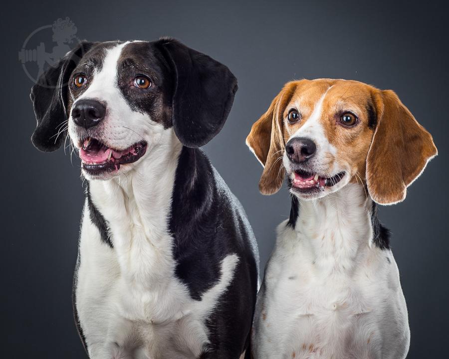 Beagle-Mix-Dog-Melissa-Laggis-4.jpg