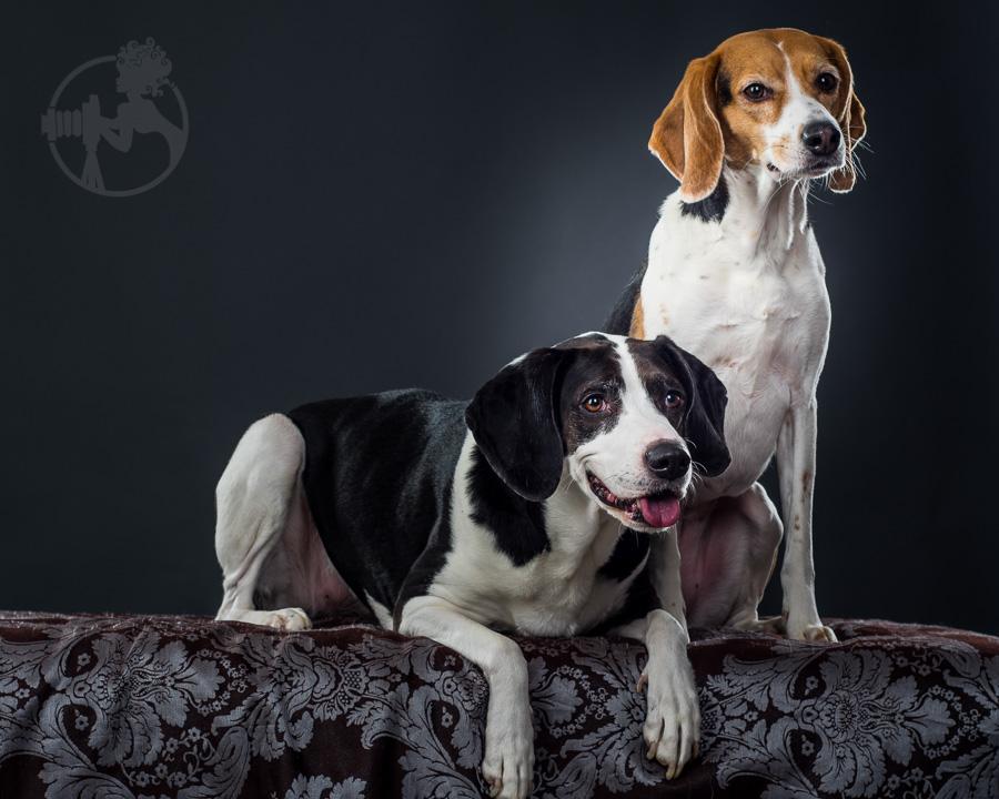 Beagle-Mix-Dog-Melissa-Laggis-11.jpg