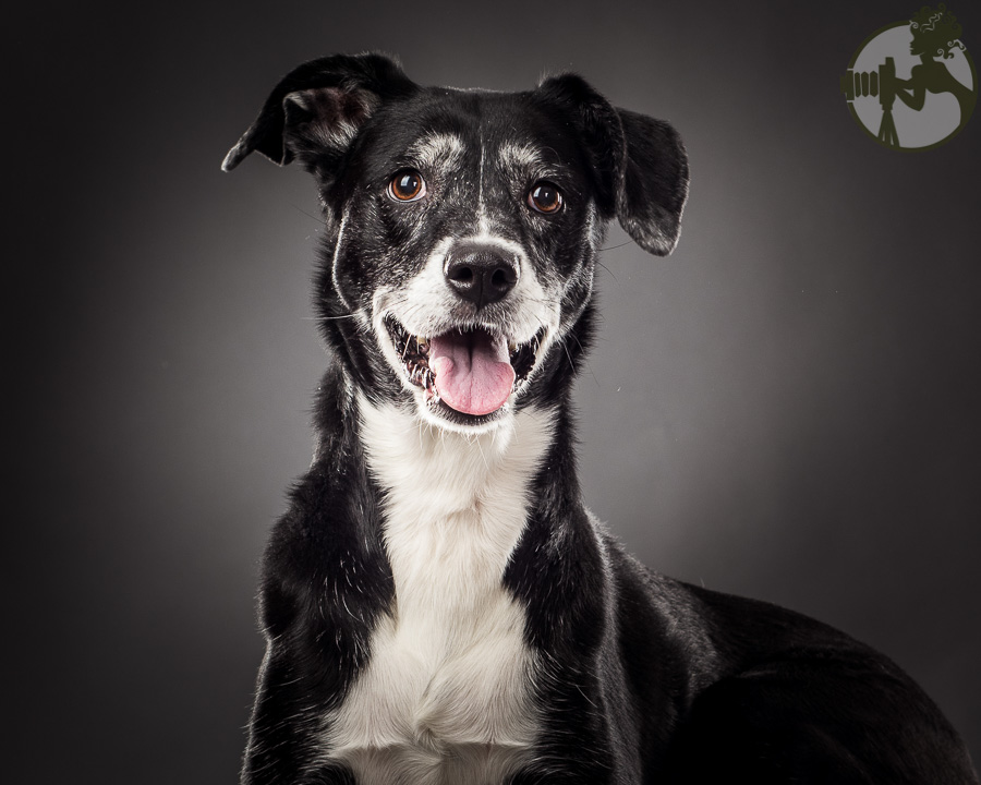 W-Poodle-Labrador-Retreiver-Dog-Melissa-Laggis-4.jpg