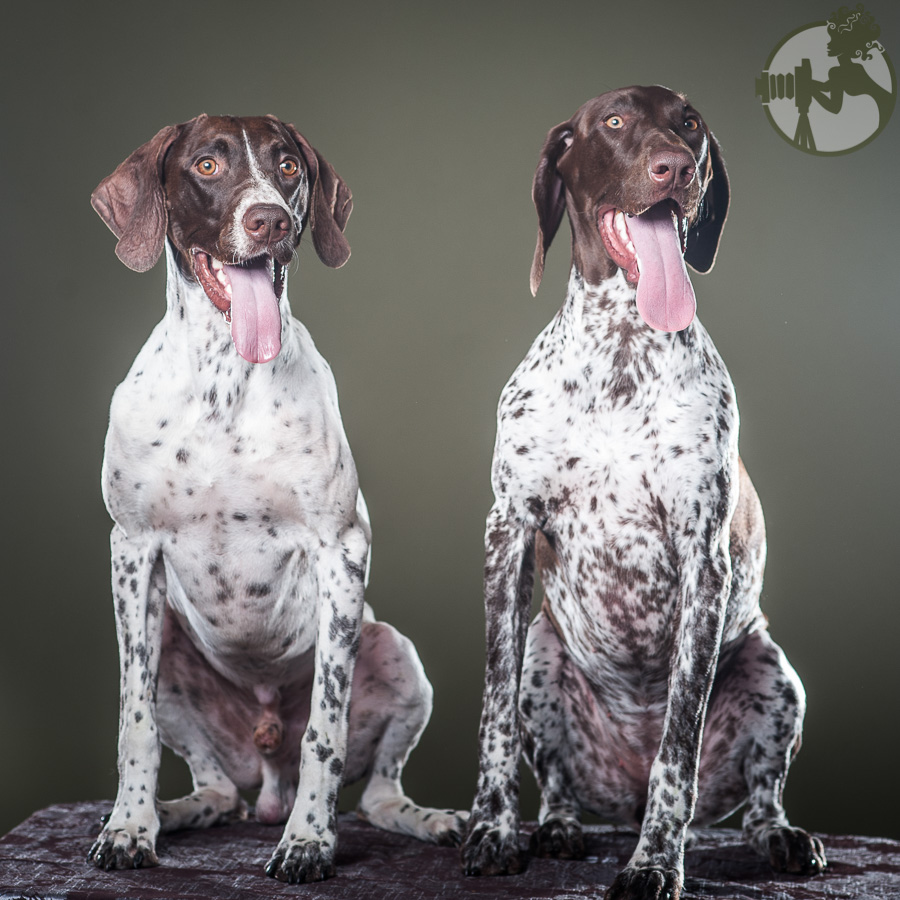 German-Shorthaired-Pointer-Dog-Melissa-Laggis-4.jpg