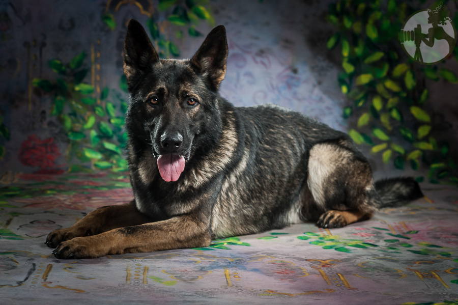 German-Shepherd-Dog-Pack-Melissa-Laggis-3.jpg