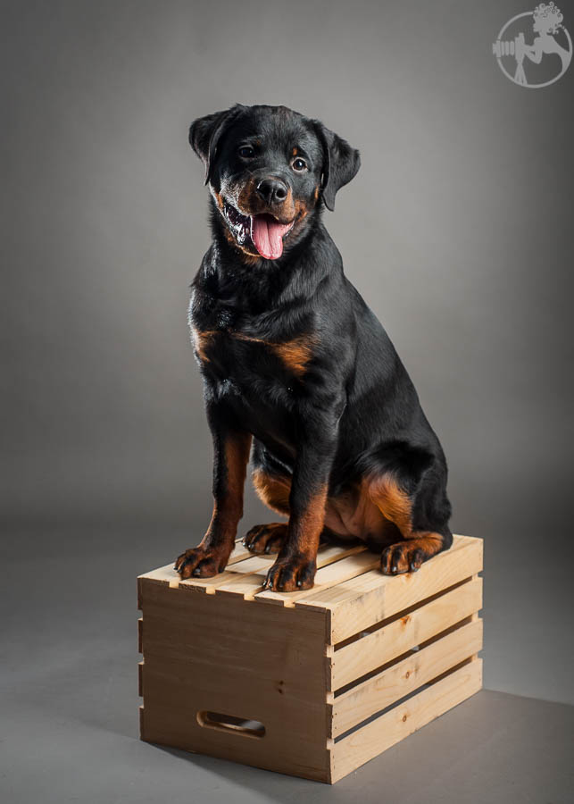 Hagen-Rottweiler-Puppy-Dog-Portraits-Melissa-Laggis-Photography-4.jpg