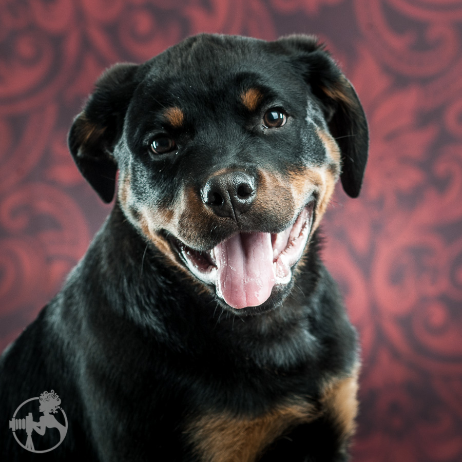 Merrill-Rottweiler-Puppy-Melissa-Laggis-Photograph-2.jpg