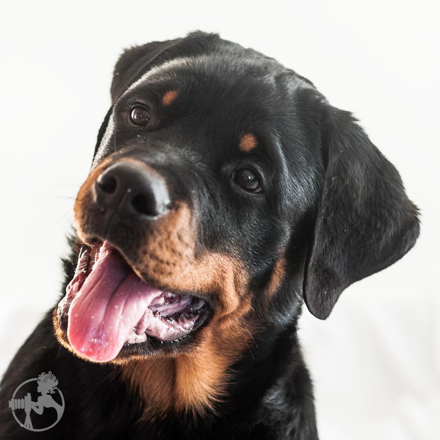 Hyden-Rottweiler-Puppy-Melissa-Laggis-Photograph-5.jpg