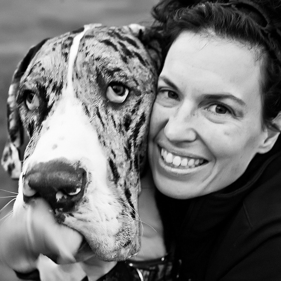 Leo was my first Great Dane. He brought great joy to all who visited him at the studio.