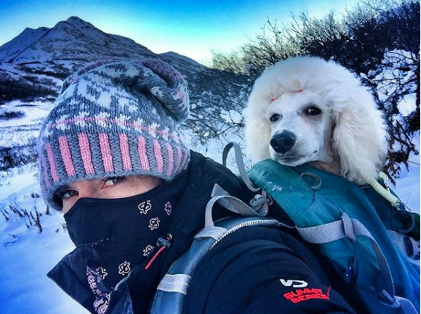 Hiking in the Alaska backcountry with a Poodle puppy on my back!