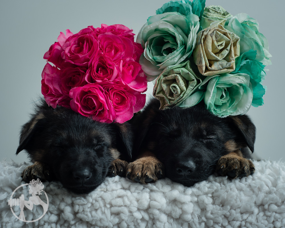 What could make these puppies even more precious? Add flowers, of course!