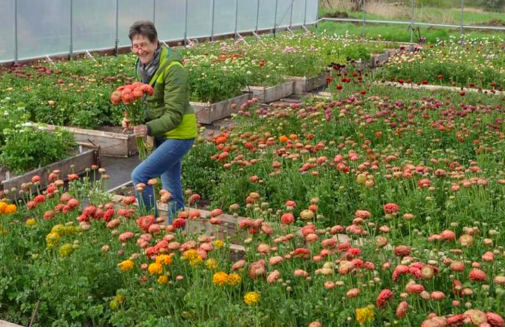 Founding Member, Vivian Larson, of Everyday Flowers tends to her ranunculus.