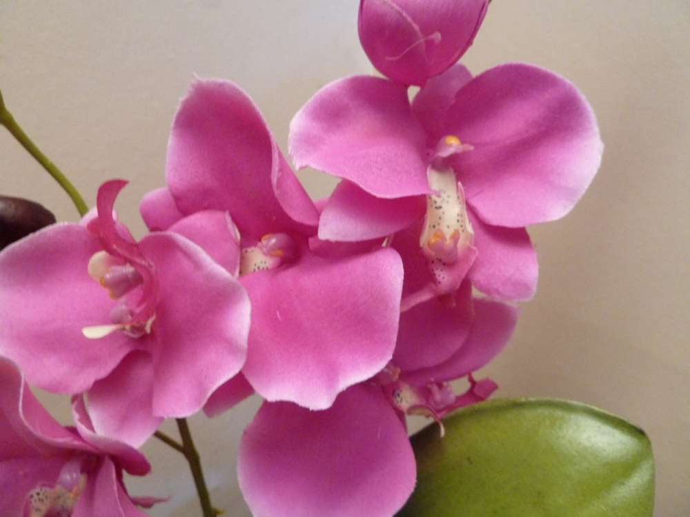 Image of magenta orchids.