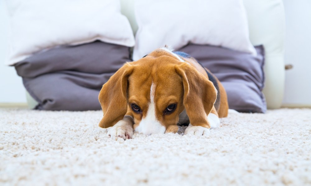 PET STAIN AND ODOR REMOVER -