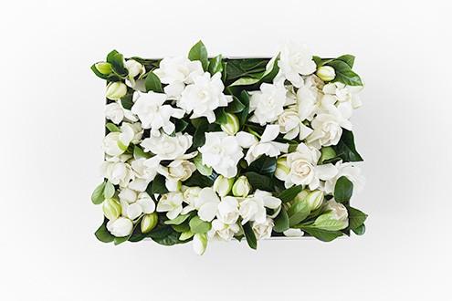 High Camp Supply Gardenia Flower Box - Event Box
